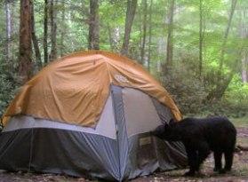 bear-tent