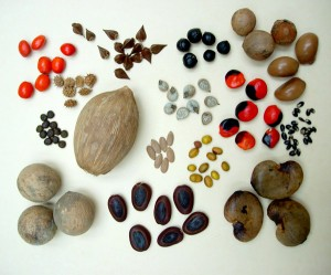 Seed_dispersal_different_L
