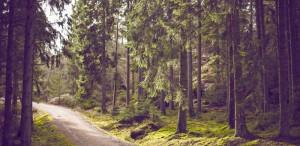 trail2-800x390