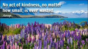 Kindness Shows Wisdom 4