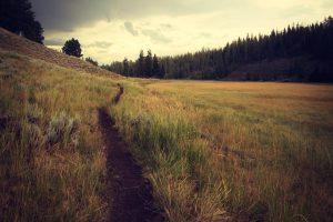 Choose the Correct Path 2